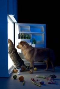 dog_cat_meat_search